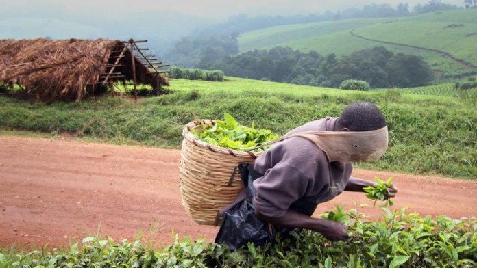 Trading organic agriculture