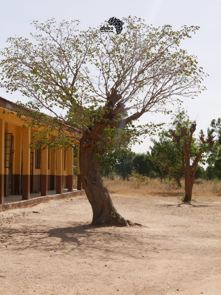 Skies and Sights of Katsina_Tree in the Ground - [Photo Credit - Iweka Kingsley]