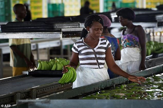 The company hopes to double production to 170,000 tonnes annually and establish a foot-hold in the lucrative South African market [Image Credit: AFP]